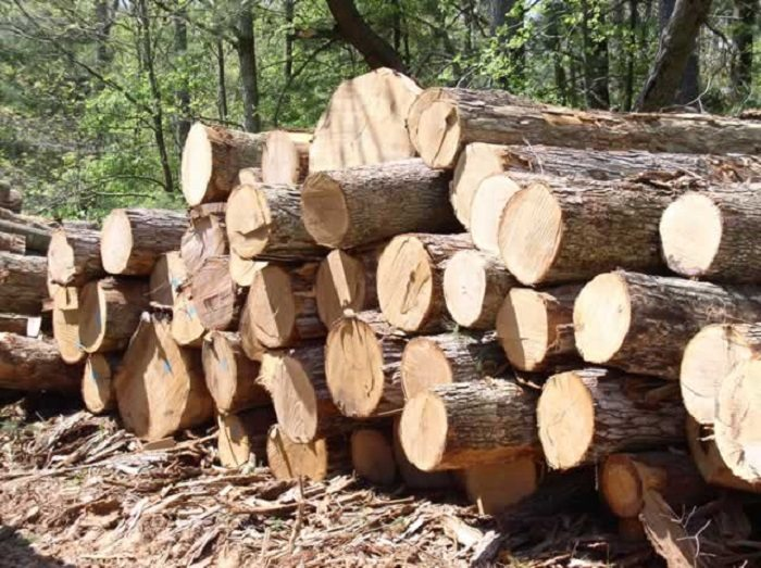 Zimbabwe timber firm Allied Timber to buy milling equipment