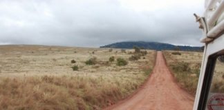 Tanzania to construct Serengeti road in next fiscal year