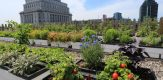 South Africa to construct rooftop gardens in Johannesburg